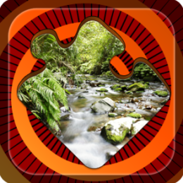 Magic Puzzles: Wild Jungles