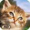A+ Kittens and Cats HD
