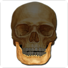 Anatomy Quiz