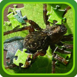 Spiders Jigsaw and Slider