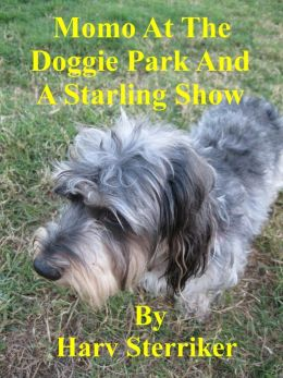 Momo At The Doggie Park And A Starling Show