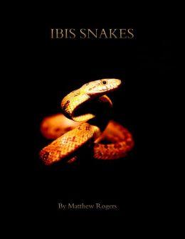 Ibis Snakes