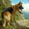 Top 50 Dog Breeds