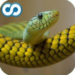 Name That Reptile (Snakes, Turtles, Lizards, Alligators)