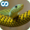 Name That Reptile (Snakes, Turtles, Lizards, Alligators)