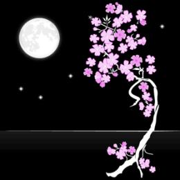 Sakura Moon HD Live Wallpaper