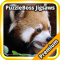 Red Pandas Jigsaw Puzzle