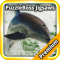 Dolphin Jigsaw Puzzles