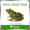 Frog Dissection by WAGmob