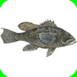 Fish RI