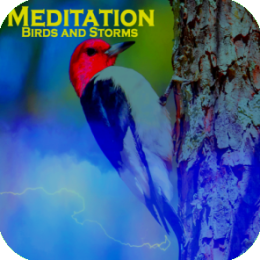 Meditation - Birds and Storms