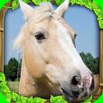 Product Image. Title: Wild Horse Simulator