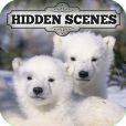 Product Image. Title: Hidden Scenes - Polar Bears