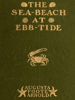 The Sea-beach at Ebb-tide