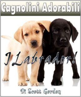 Cagnolini Adorabili: I Labrador