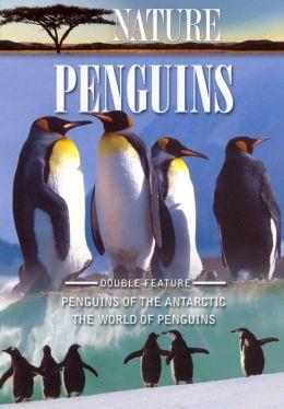 Nature: Penguins