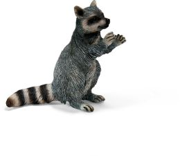 Raccoon, standing