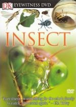 Eyewitness: Insect