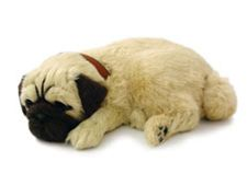 Perfect Petzzz XP91-09 Plush Pug