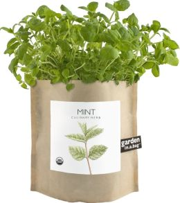 Mint Indoor Garden in a Bag