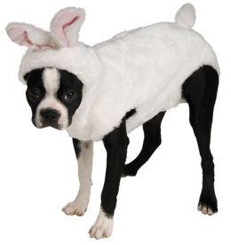 Bunny Pet Costume: Small