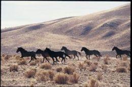 Safari 323821 Running Wild Poster - Pack Of 3