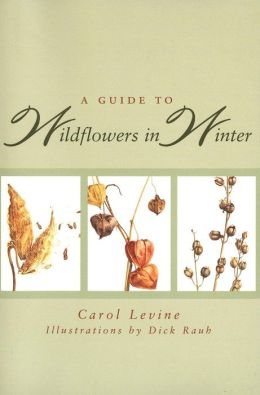 A Guide to Wildflowers in Winter: Herbaceous Plants of Northeastern North America