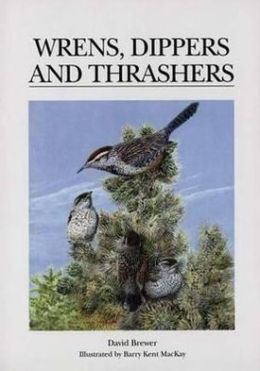 Wrens, Dippers and Thrashers: A Guide to the Wrens, Dippers, and Thrashers of the World