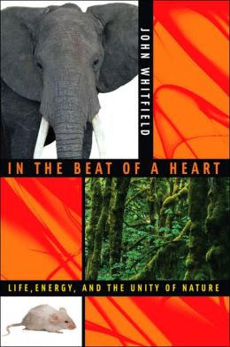 In the Beat of a Heart: Life, Energy, and the Unity of Nature