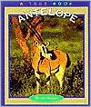 Antelope (True Book Series)