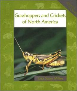 Grasshoppers and Crickets of North America (Animals in Order)