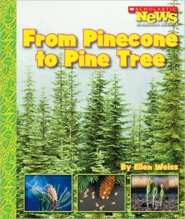 From Pinecone to Pine Tree