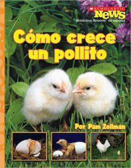 Como crece un pollito: A Chick Grows Up