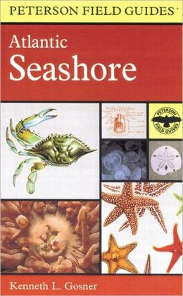 A Field Guide to the Atlantic Seashore: From the Bay of Fundy to Cape Hatteras