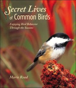 Secret Lives of Common Birds: Enjoying Bird Behavior Through the Seasons