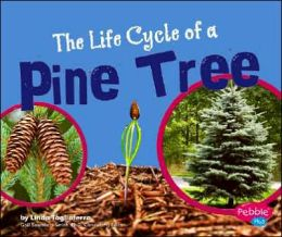The Life Cycle of a Pine Tree
