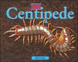 Centidpede