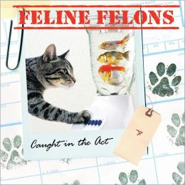 Feline Felons: Caught in the Act