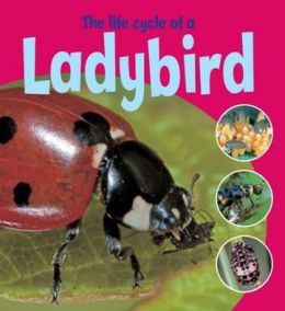 Life Cycle of a Ladybird