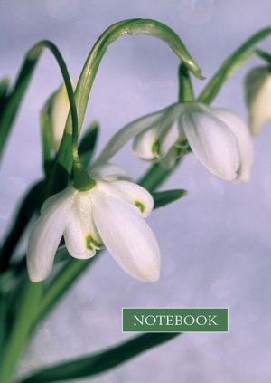 Notebook: Snowdrop