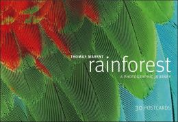 Rainforest Postcard Book