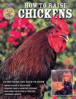 How To Raise Chickens: Everything You Need To Know
