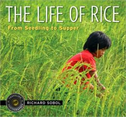 The Life of Rice: From Seedling to Supper
