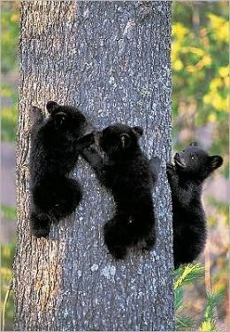 Black Bear Cubs Sierra Club Pocket Journal
