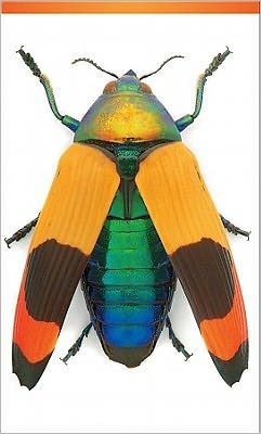 Jewel Beetle 3 X 5 Notepad