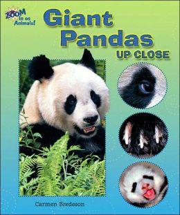 Giant Pandas up Close