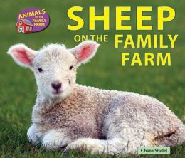 Sheep on the Family Farm