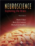 Book Cover Image. Title: Neuroscience:  Exploring the Brain, Author: Mark F. Bear
