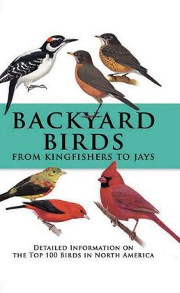 Backyard Birds: From Kingfishers to Jays