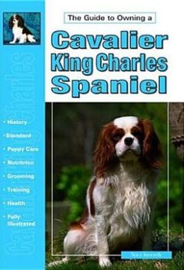 The Guide to Owning a Cavalier Ring Charles Spaniel